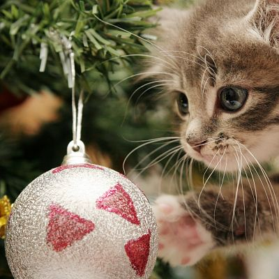 Kitten and Christmas Tree Bulb